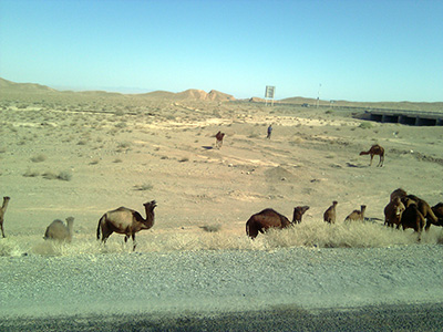 camel-silk-road-adventure